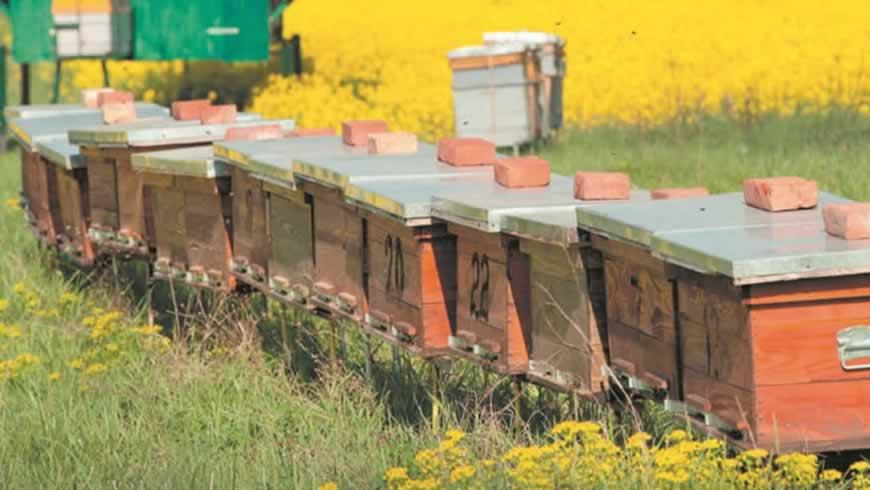 Четыре причины купить мёд в Союзе Пасечников